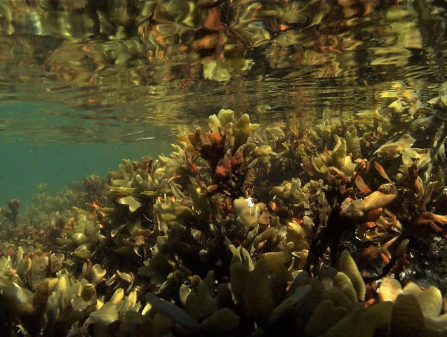2.4 Millions de dollars pour les biotechnologies marines