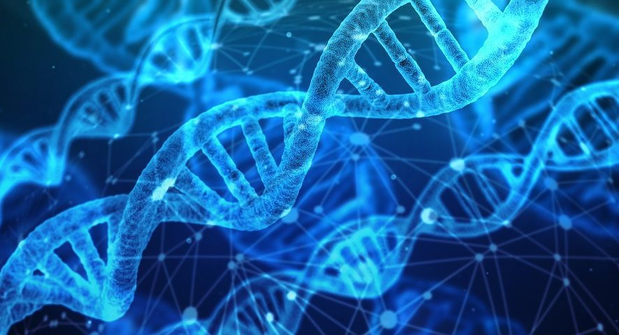 Des chercheurs du CRCHUM dévoilent le rôle d'une protéine du cerveau