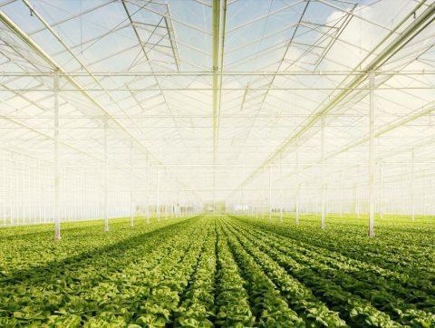 AGRICULTURE : QUÉBEC INVESTIT 6M$ POUR DÉVELOPPER DES TECHNOLOGIES INNOVANTES