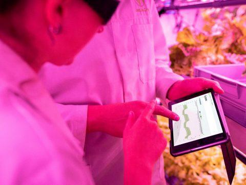 L'omniprésence de l'IA dans l'agroalimentaire