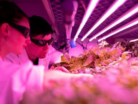 L'industrie des bioprocédés se prépare à la révolution IA