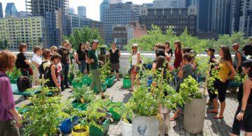 11ème édition de l'Ecole d'été sur l'agriculture urbaine de Montréal