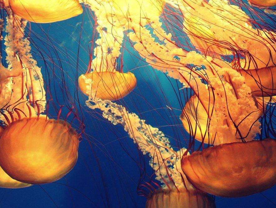 Les océans au coeur de la semaine de la culture scientifique