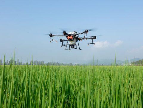 DES DRONES AU SECOURS DE LA BIODIVERSITÉ