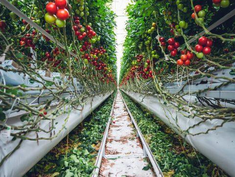 Rendre les serres agricoles québécoises plus intelligentes