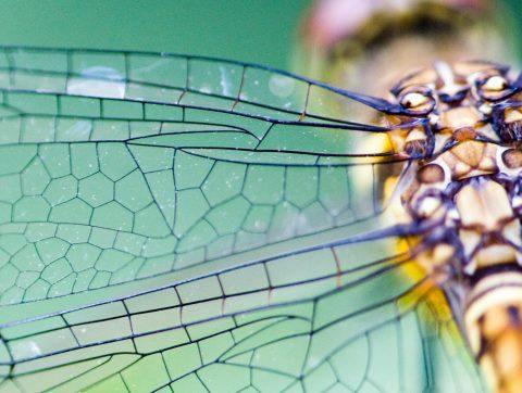 Biomimétisme : quand la nature inspire l'innovation dans l'Armée