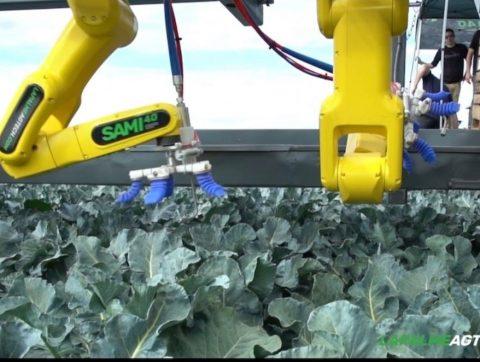 SAMI 4.0 : le robot cueilleur au service de la récolte au Québec